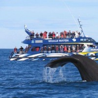 BW Romantic South Island 7D (SQ)